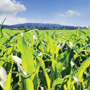 agricultura-conventionala